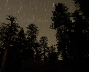 Stars above the forest of Mount Charleston