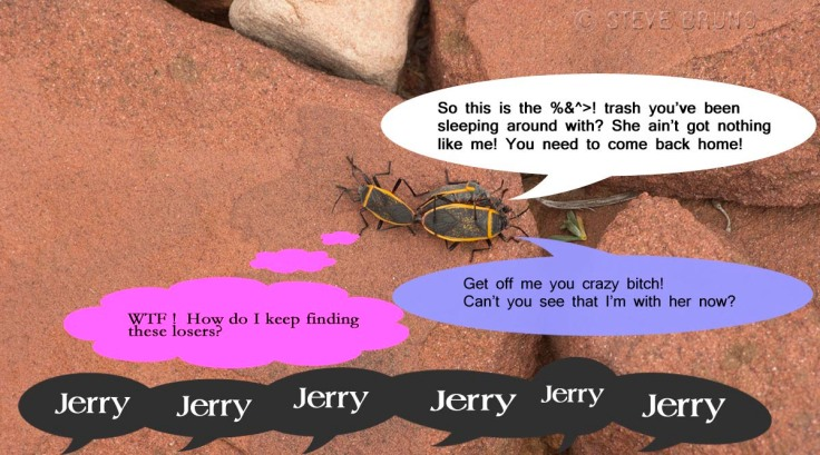 Jerry's Bugs