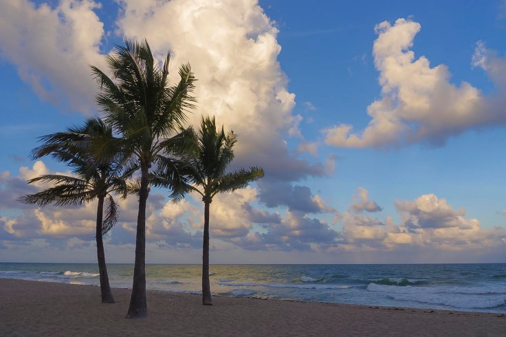 Three Palms-Fort Lauderdale-Steve Bruno
