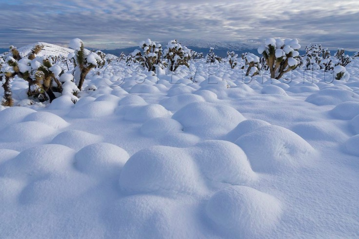Winter buries the desert at the base of Mount Charleston, Nevada by Steve Bruno
