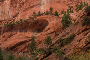 Taylor Creek Canyon, Zion National Park, Utah