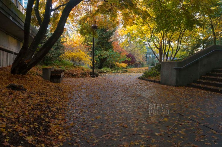 autumn, Freeway Park, Seattle, Washington
