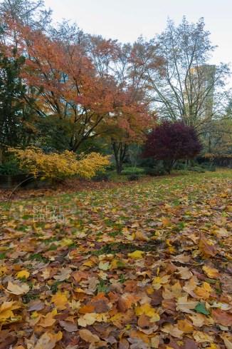 autumn, Freeway Park, Seattle, Washington