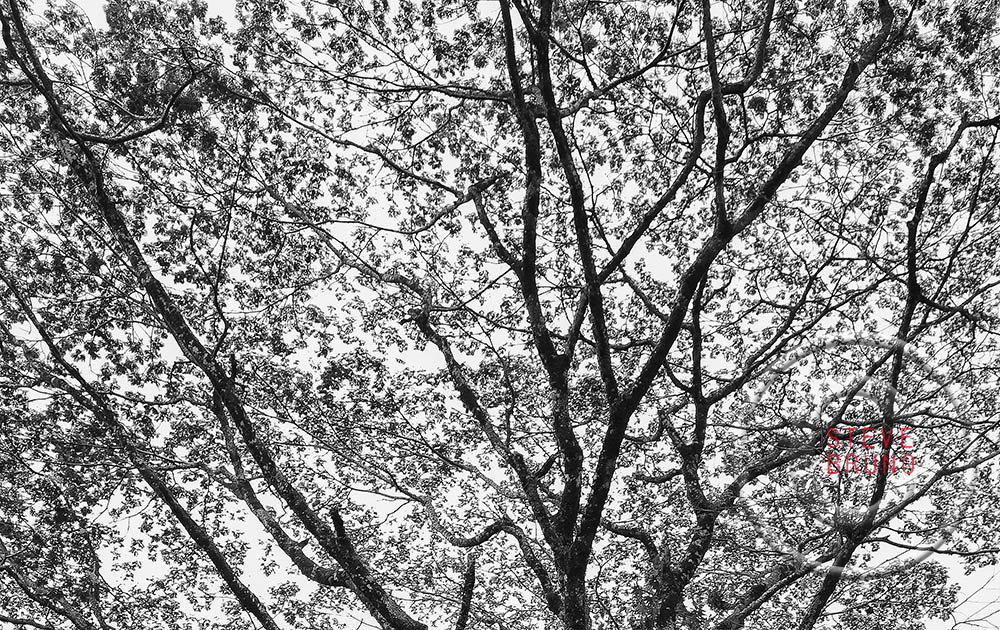 tree branches, patterns