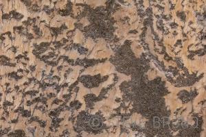 Canyon Wall Detail - Steve Bruno