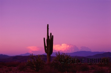 Lone saguaro cactus and distant thunderstorm