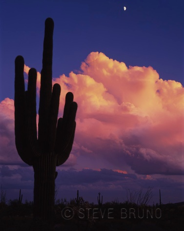 Lone saguaro cactus at sunset with moonrise