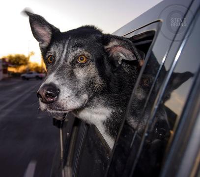 passenger dog - gottatakemorepix