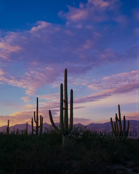 Saguaro National Park sunset, Arizona