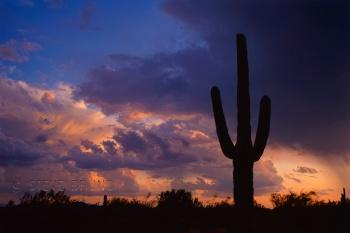 Postcard saguaro cactus at sunset, Arizona