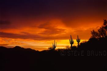 Three saguaro cacti at sunset, Arizona