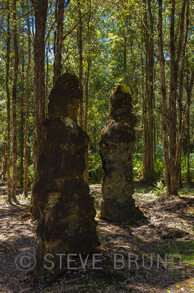 Lava Trees State Monument Hawaii