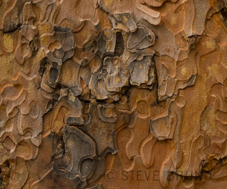 pine-tree-bark-detail