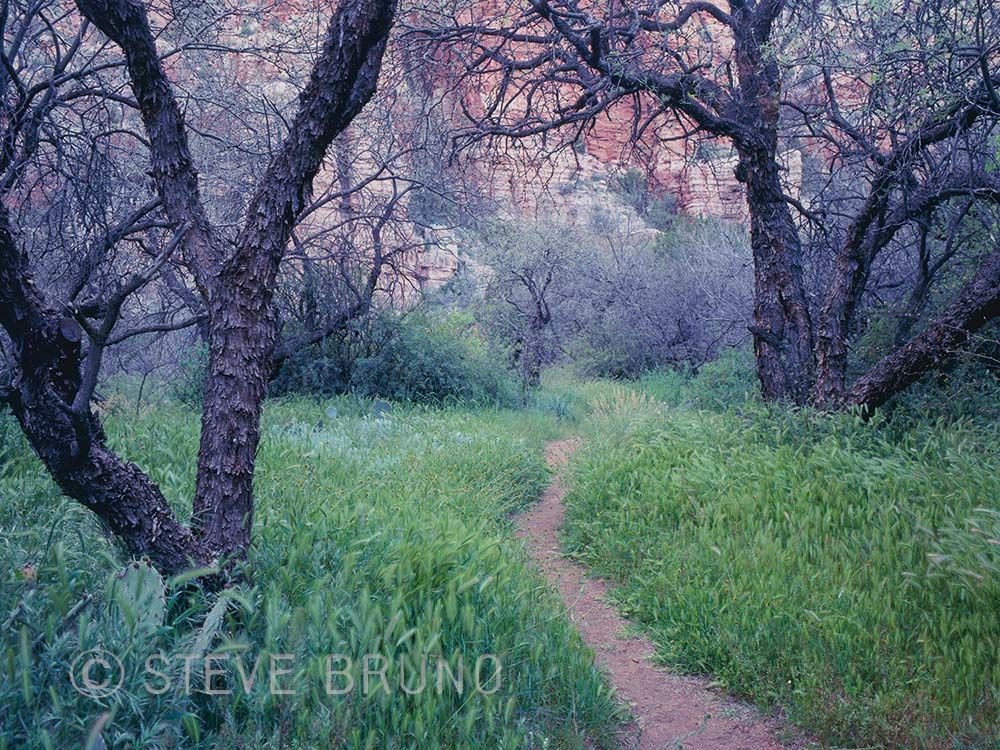 Sycamore Canyon Wilderness, trail, hiking, Arizona, Steve Bruno