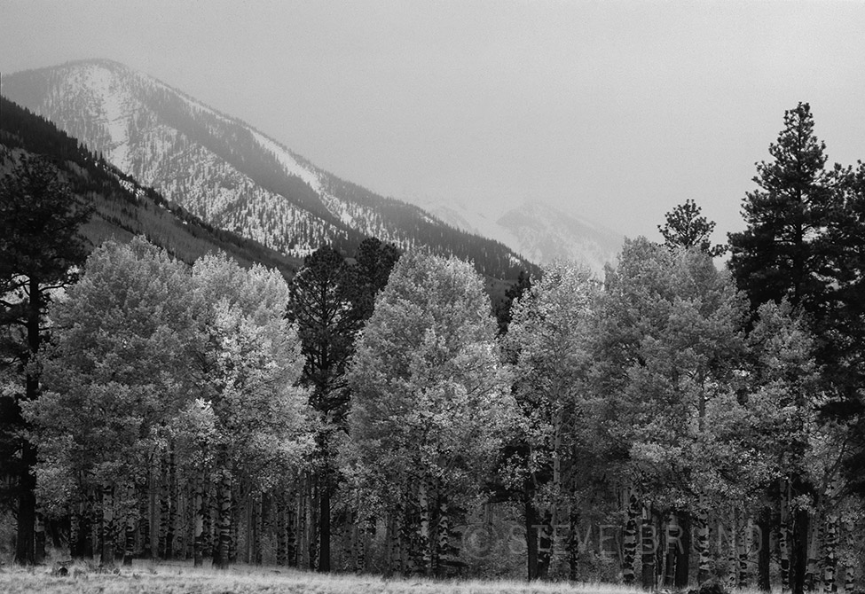 autumn, inner basin, san francisco peaks, snow, flagstaff, steve bruno, gottatakemorepix