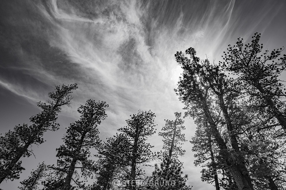 wispy clouds, trees, forest, Mount Charleston, Nevada, Steve Bruno