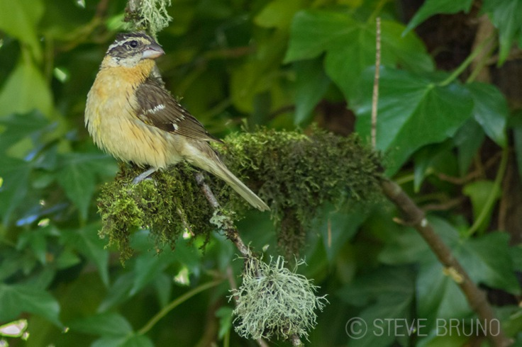 bird, tree, Oregon, Steve Bruno