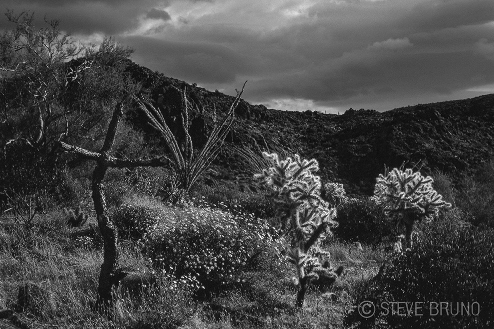 desert, Arizona, cross, cactus, Steve Bruno photography