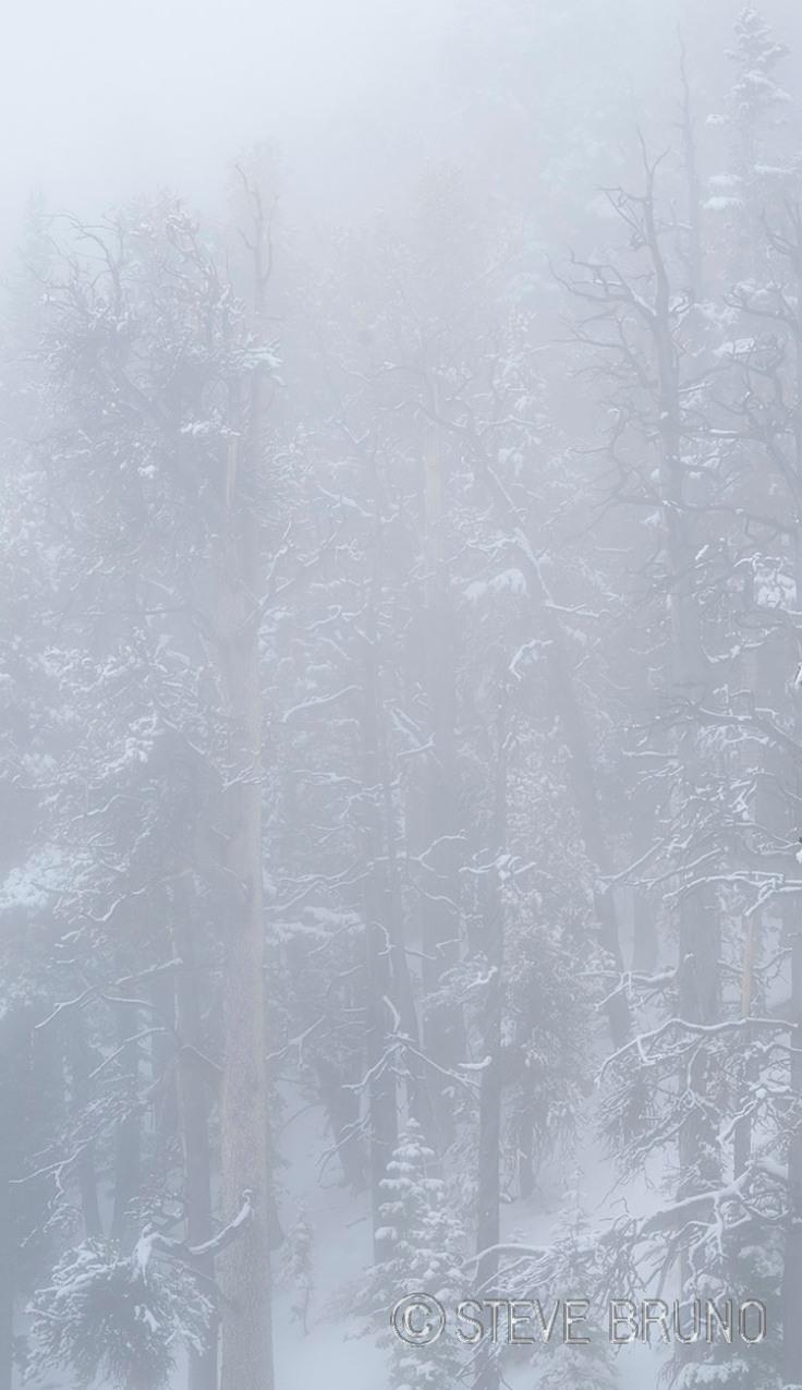 dense fog, trees
