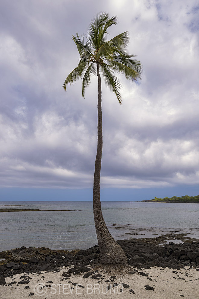 lone palm tree, Hawaii, Steve Bruno
