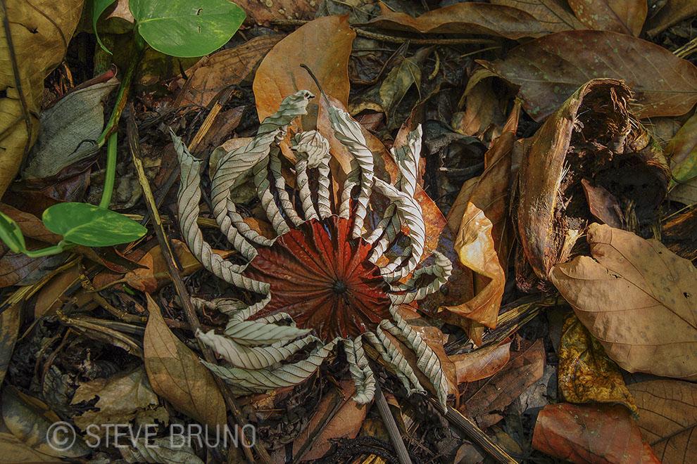 fallen leaves, Hawaii, rain forest, Steve Bruno photography