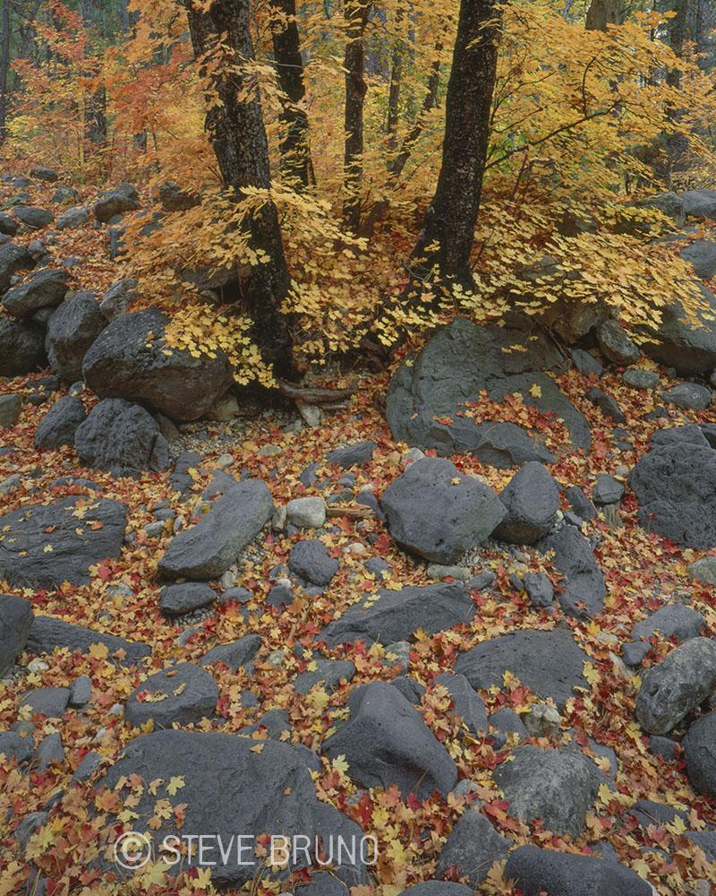 autumn, fallen leaves, Oak Creek Canyon, Sedona, Arizona, Steve Bruno photography