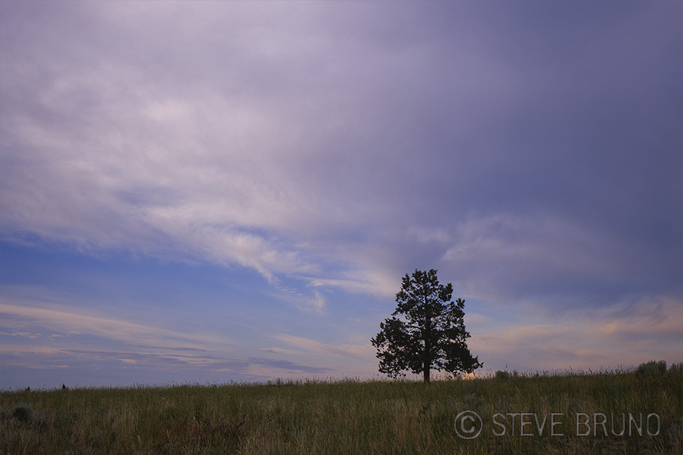 tree, clouds, Oregon, Steve Bruno