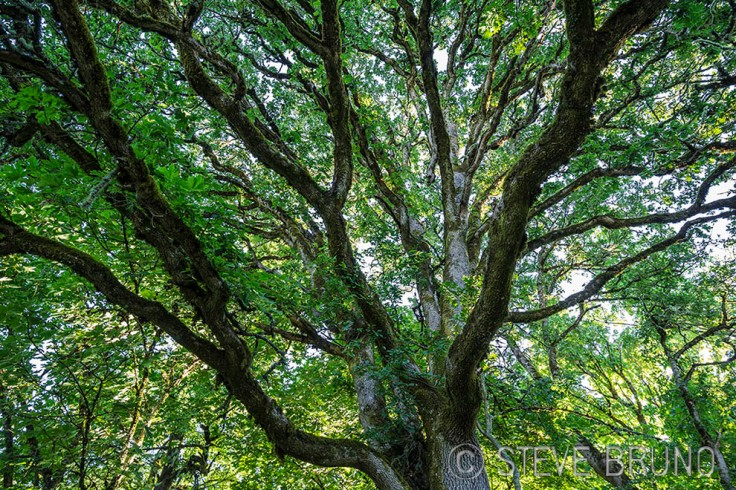 tree, patterns, Steve Bruno, Oregon