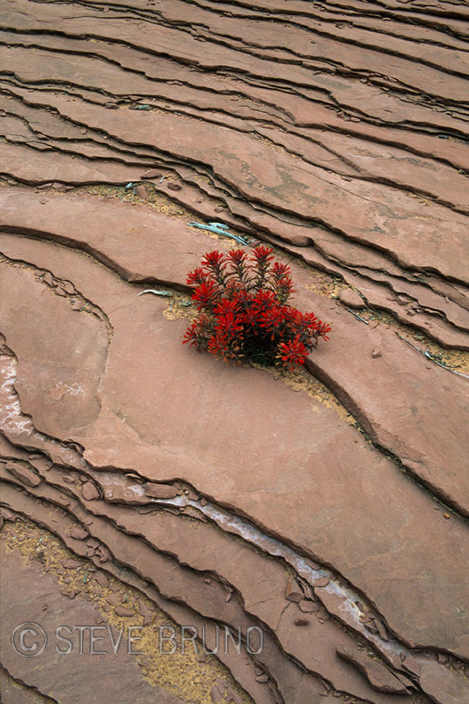 Red Rock, sandstone, flowers, desert, Rainbow Bridge, Utah, Arizona