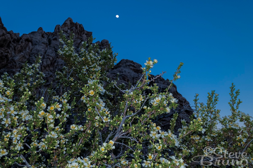 flowers, moonrise, Red Rock Canyon, Nevada