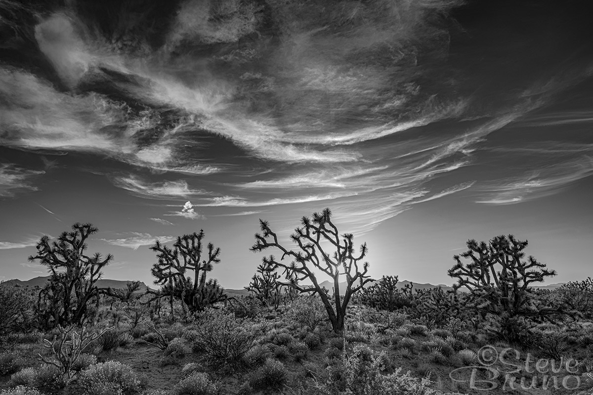 Joshua Tree, Arizona, clouds, Steve Bruno photography